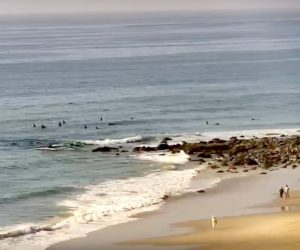 salt creek live cam